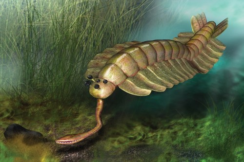 Opabinia Weird Prehistoric Creatures