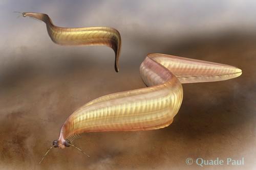 Pikaia Weird Prehistoric Creatures