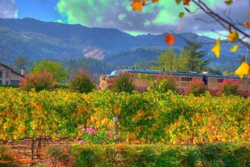 Napa Valley Wine Train from Napa