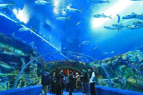 Aquarium of Western Australia, Perth