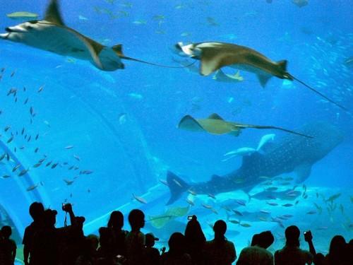 Okinawa Churaumi Aquarium, Okinawa