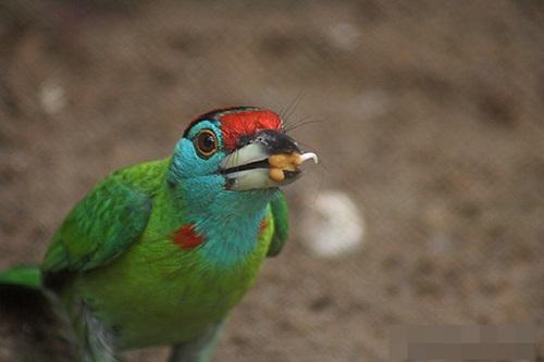 Endangered Species, Close to Extinction