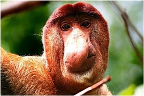 ugliest animals
