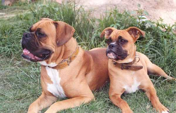 Dog Breeds for Kids and Families