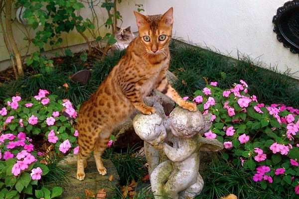 The Bengal – $25,000
