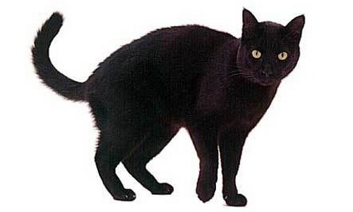 Black Cats: Good Luck or Bad Luck