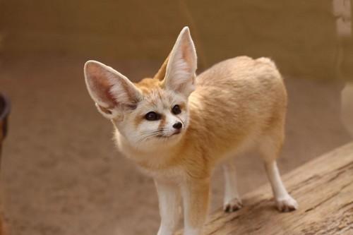 top 10 cutest animals