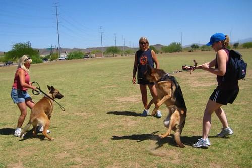 Leash Aggressiveness of dogs