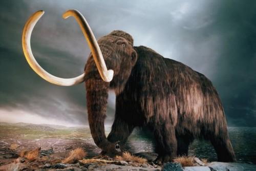 Woolly mammoth found frozen