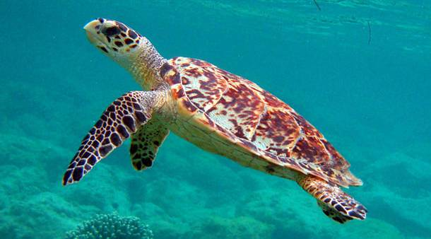 Animals that are at the verge of extinction