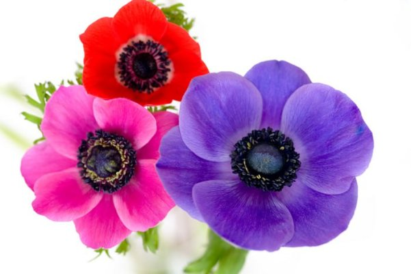 10 Flowers to Keep your Garden Colorful this Fall