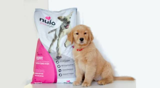 10 Essential Puppy Products Every Dog Owner Should Have