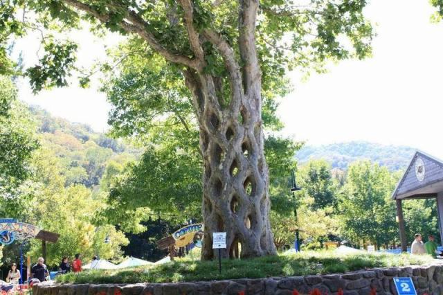 Basket Tree strangest trees
