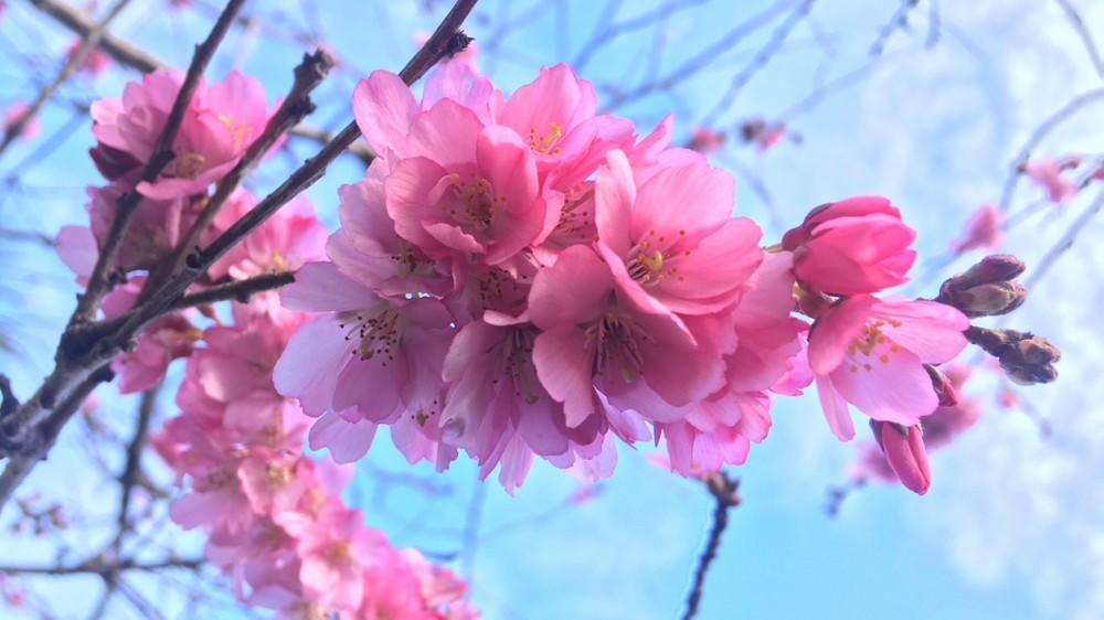 Top 10 Most Beautiful Flowers In The World Wonderslist