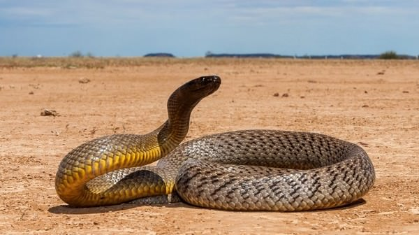 Inland Taipan deadliest snakes
