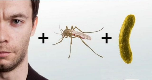 Malaria Control Specialist