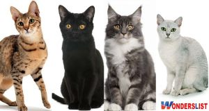 Beautiful Mixed Cat Breeds in the World