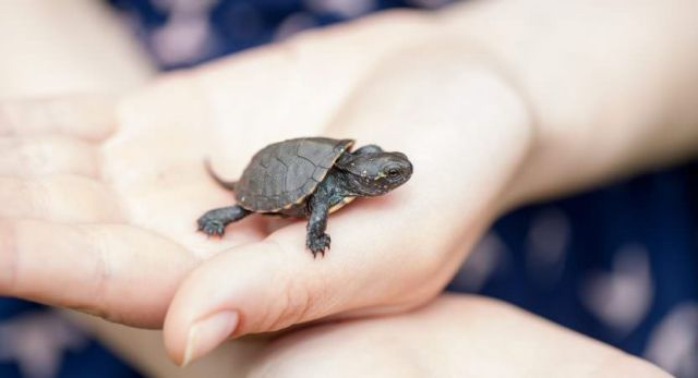 Small Turtle Adorable Pets for Kids