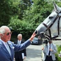 Prince Charles horse