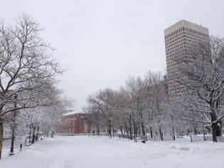 blizzard-3-014