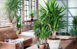 planten-interieur