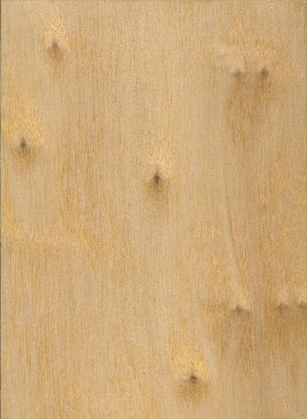 Poplar Wood Grain