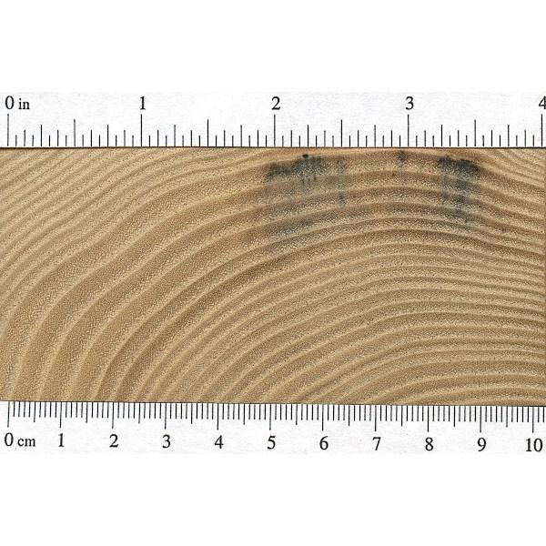 Sassafras Lumber Price