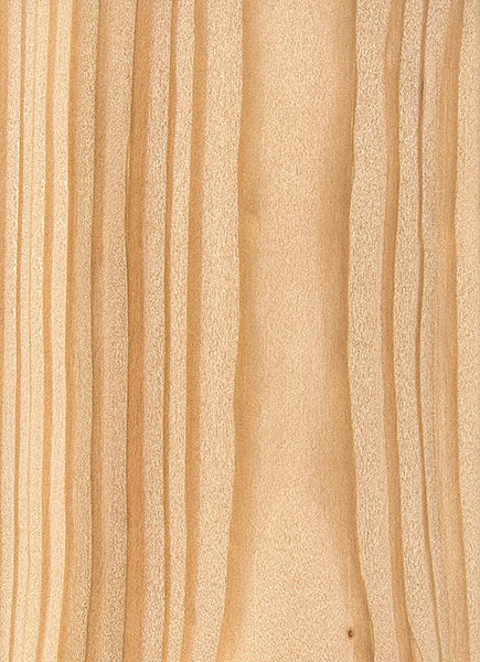 Western Larch  The Wood Database  Lumber Identification