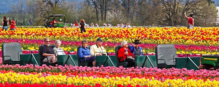 tulip-fest-gallery7