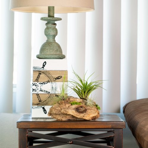 Air Plant Wall Display Hanging Driftwood Display With Living Air
