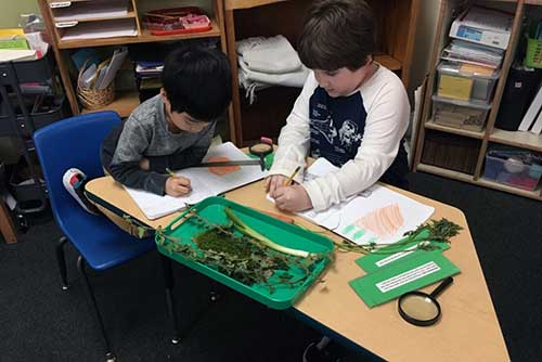 Two elementary boys identify types of roots