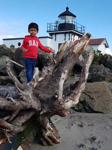 A toddler stands on a big tree root on the beach