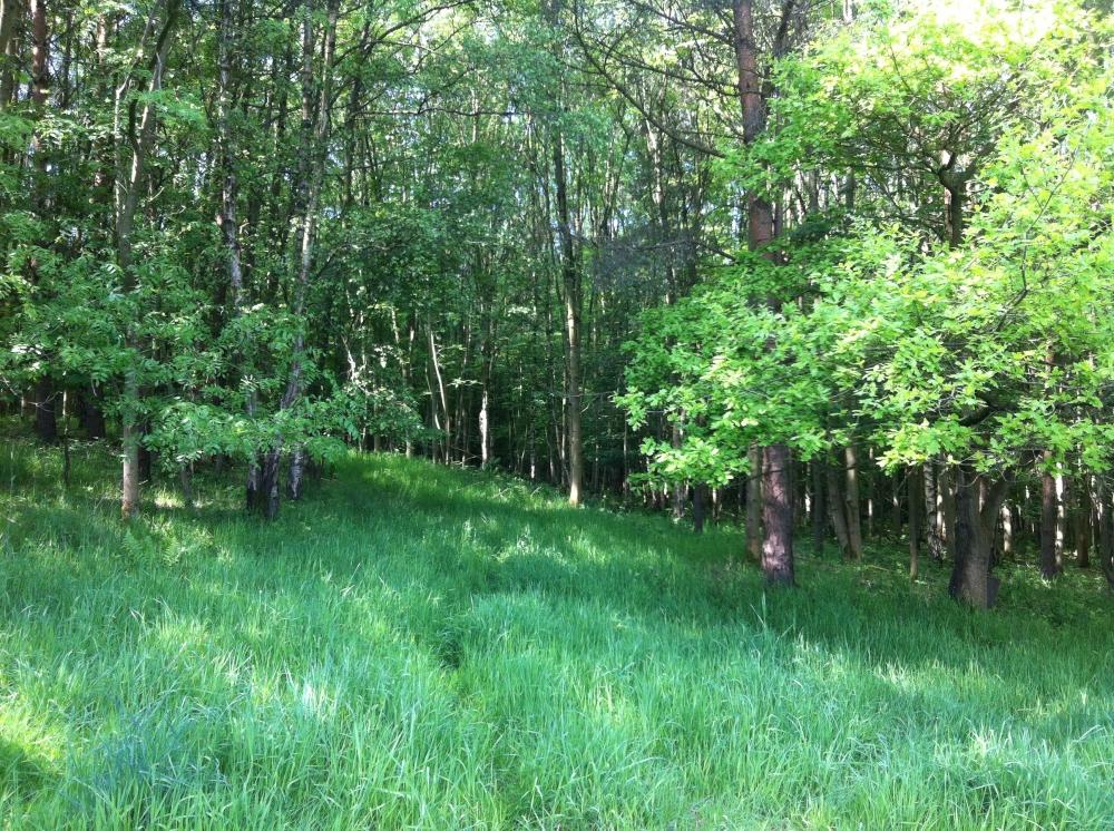 Burgage Wood  SOLD Alvechurch Near Redditch