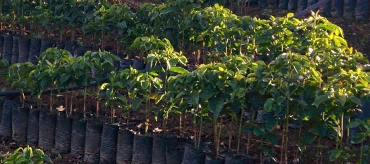 Coffee of the Month: Kenya Kiangothe