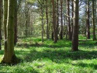Woodlands For Sale Northern England