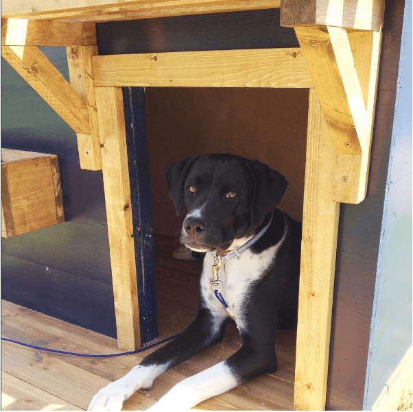 Lean To Dog House - Best House 2017
