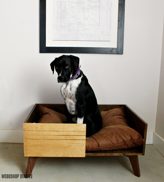 Lucy Lou in her DIY Modern Dog bed looking at the camera