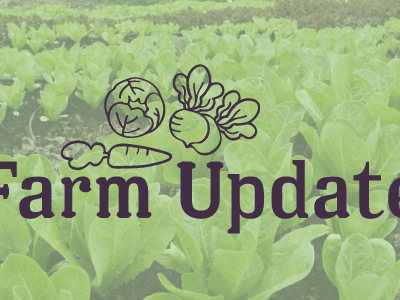 Farm Update: May 2017
