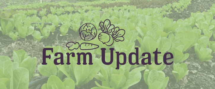 Legacy City Farm Update: May 2017