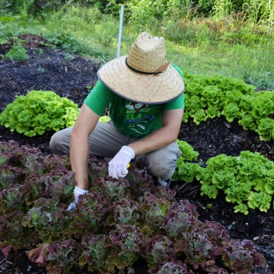 Lettuce Rejoice!