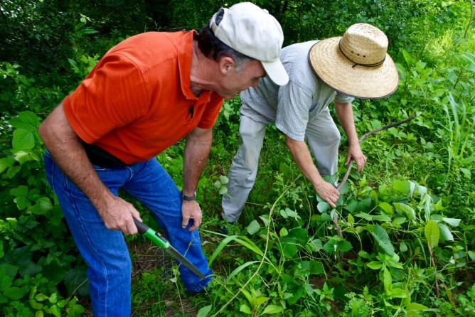 SCEPPC President, Bill Steele, and WCF Farmer, Jason Schmidt, work to remove kudzu.