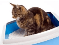 cat inside litter box