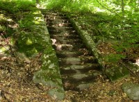 Woods Wanderer  Natural versus Artificial
