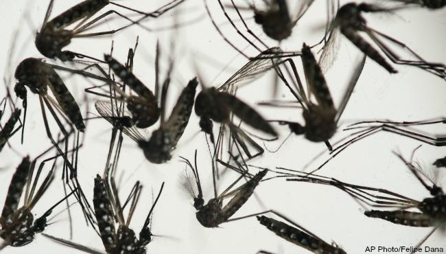 mosquitoes Zika generic AP_185951