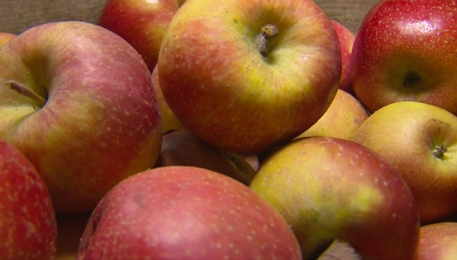 evercrisp-apple-020617_284855
