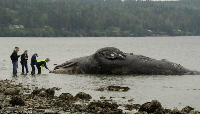 dead whales AP 062119