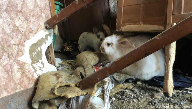 Debris, rabbits in Catherine Avenue home