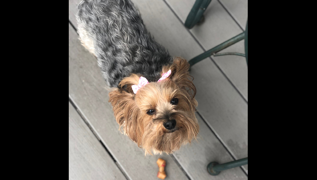 To celebrate National Dog Day, News 8 staffers shared photos of their canines. Above is a photo of Reporter Katherine Ducharme's dog, Bella.