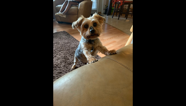 To celebrate National Dog Day, News 8 staffers shared photos of their canines. Above is a photo of Reporter Whitney Burney's dog, Peanut. He was named after the tan coloring of his face. His favorite activities include begging for hot dogs or lunch meat and sunbathing.