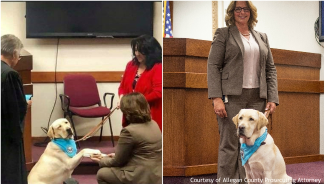 A collage of Joey, a canine advocate in Allegan County Prosecuting Attorney's office. (Courtesy of Allegan County Prosecuting Attorney)